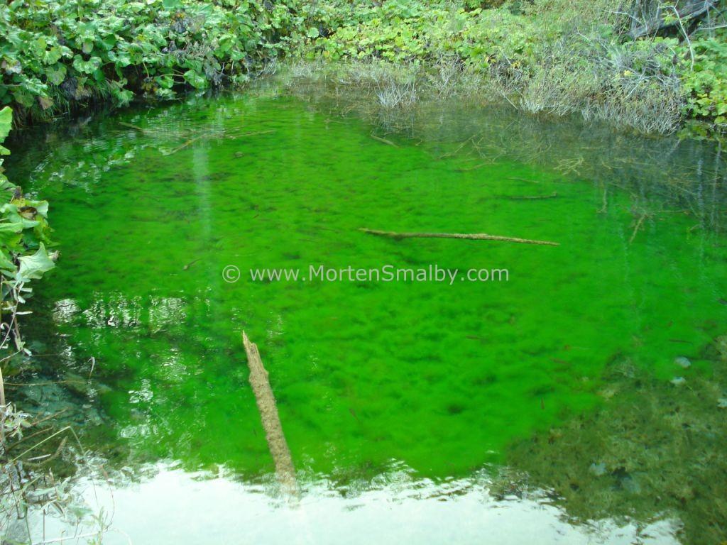 color verde dei laghi di Plitvice