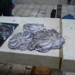 pescheria a Spalato5
