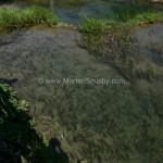 parco-nazionale-krka-foto-vita-selvatica