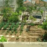 primosten-foto-giardino