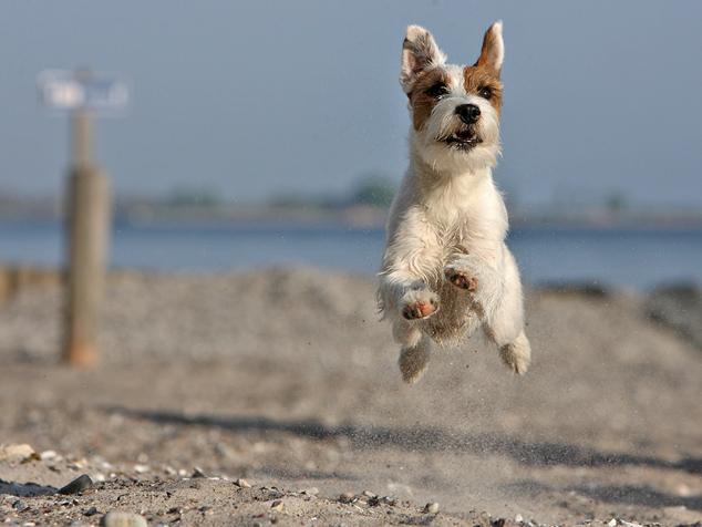 spiagge da cani