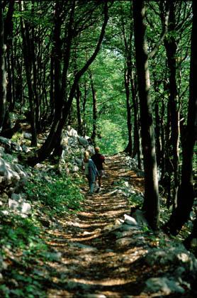 Parco nazionale Risnjak1